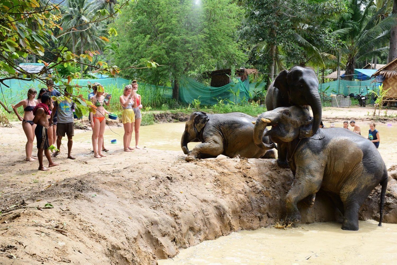 Samui Elephant Sanctuary Elefanten baden