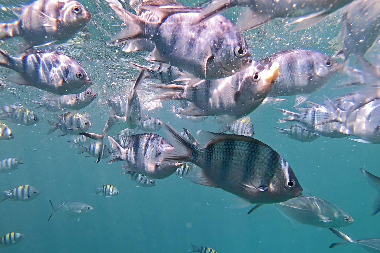 Samui Secret Island Tour Fische