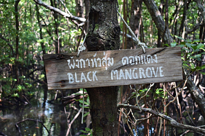 koh-tan-mangroven