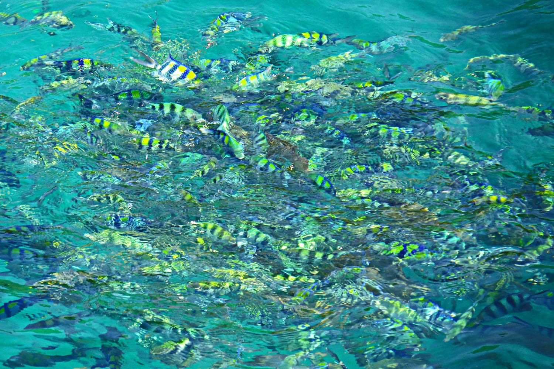 Schnorchel Ausflug Fische