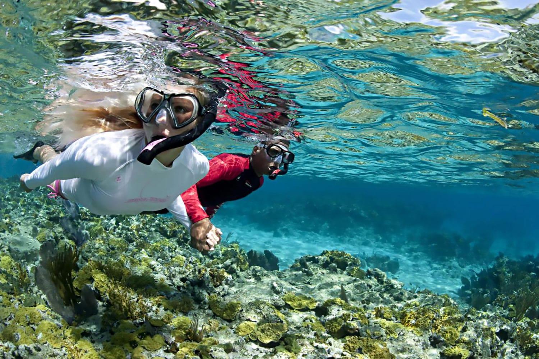 Schnorcheln Koh Tao Korallen